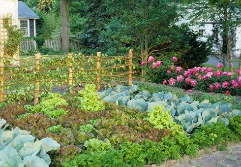 Avant Garden