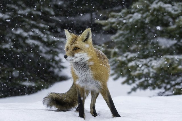 Winter 2017 Nature