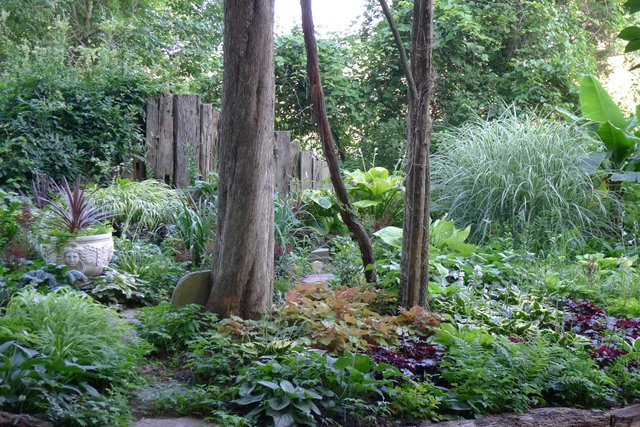 4- Shady woodland is an ideal location for a layered garden using foliage plants of different heights, colors and textures at Cedaridge farm..jpg