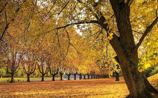 Fall 2018 Nature