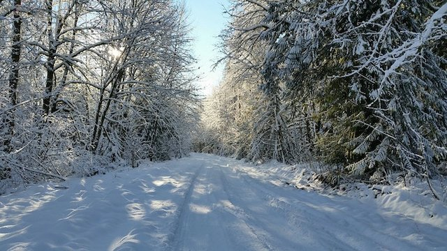 Winter 2018 Nature