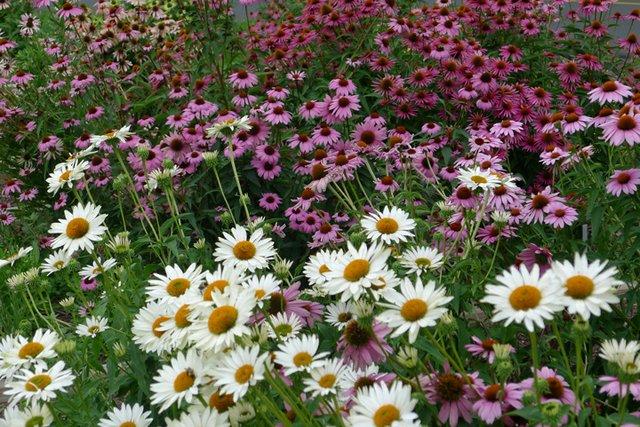 Mass Plantings