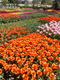 Longwood Gardens in early spring.png