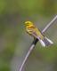 Bird 2.png