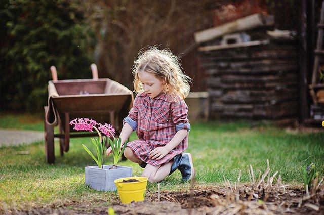 Springs Gardening
