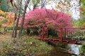 P104 131 Garden Cedaridge Farm, bridge and burning bush.jpg