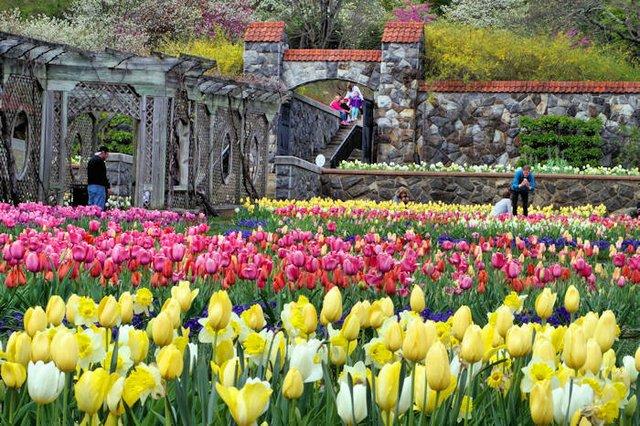 Garden Spring 2020