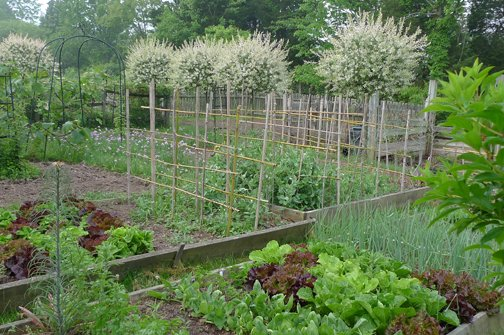 Avante Gardening