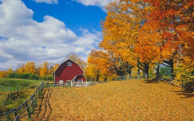 fall nature 2020