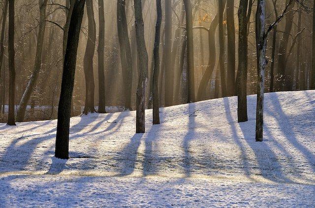 Light_Through_the_Trees-RuthCTaylor.jpg