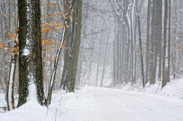 WinterMistAlongCuttalossaRoad-RuthCTaylor.jpg