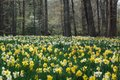 Narcissus Woods April 13, 2019 #3.jpg