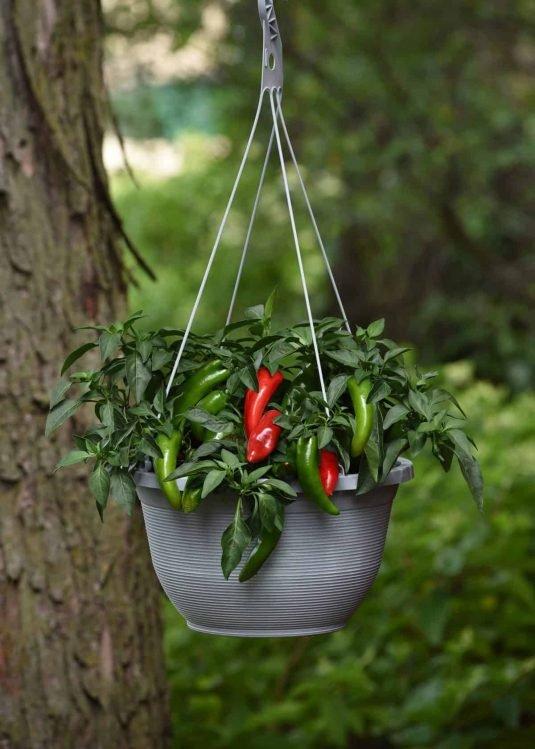 Pepper-Pot-a-peno-scaled-535x749.jpg