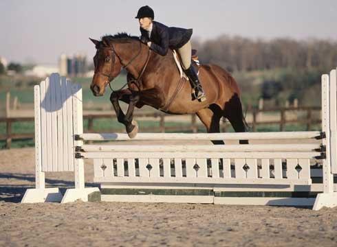 Equestrian summer 14