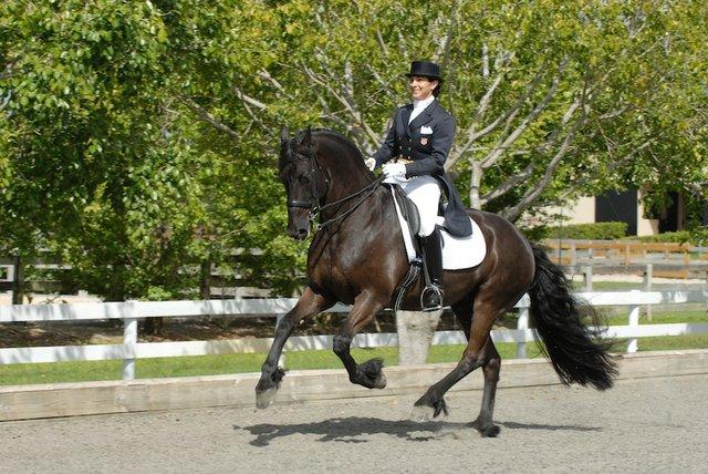 Equestrian fall 14